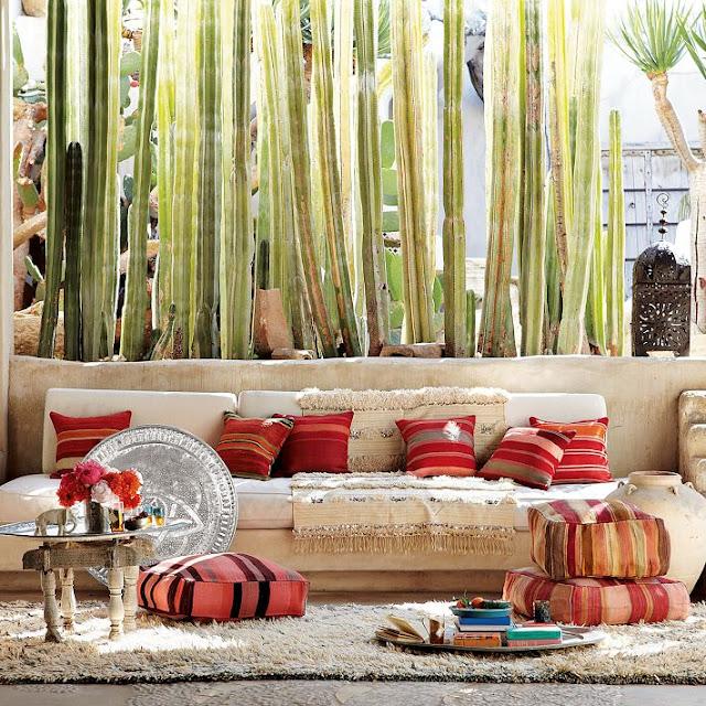 Cactus, cactus y más cactus